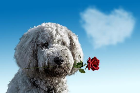 Dog with a rose on blue sky